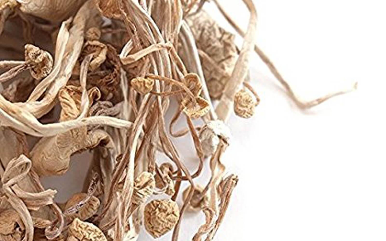 از کجا قارچ انوکی بخریم ؟